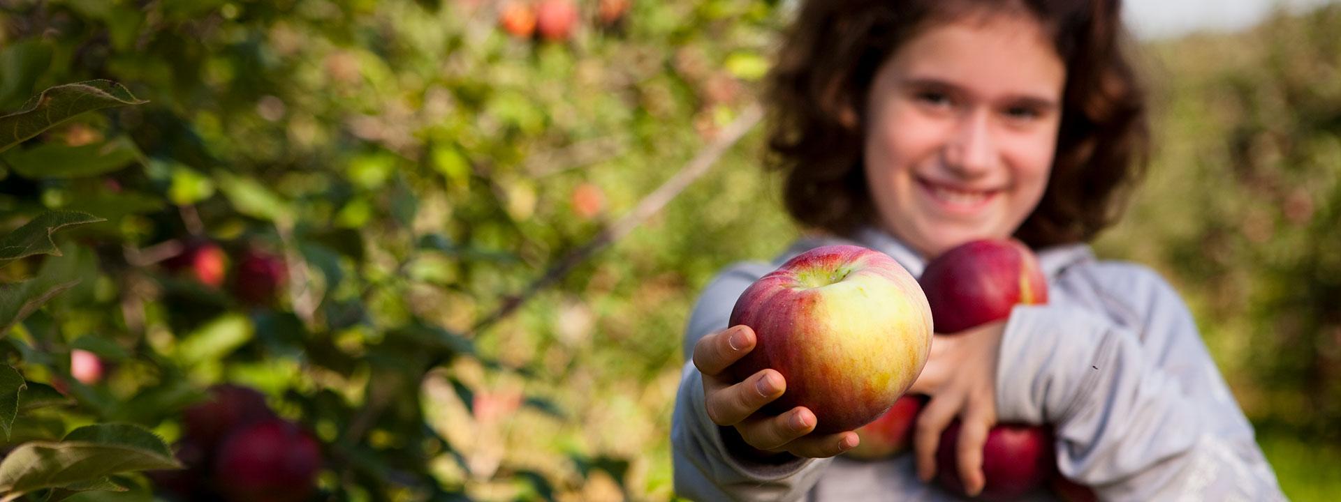 Venez ceuillir vos pommes biologiques au verger Au coeur de la pomme